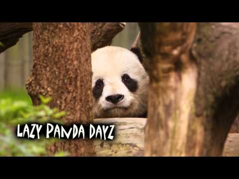 lazy panda - Download Music: http://teknoaxe.com/cgi-bin/link_code_2.pl?404 **This track is Royalty Free and is free for anyone to use in YouTube videos or other projects...