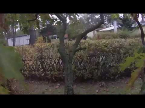 Cat Jumps Off Tree with GoPro - Freefall HD