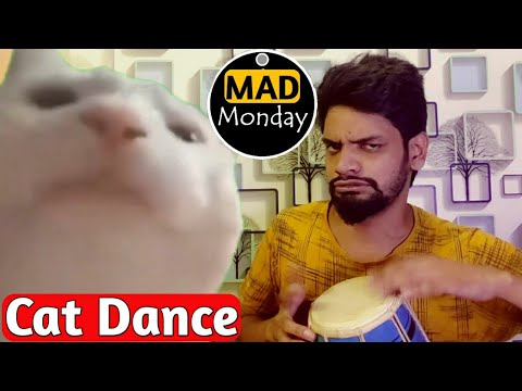 MAD MONDAY | Funny Cat Dancing | Funny Dance