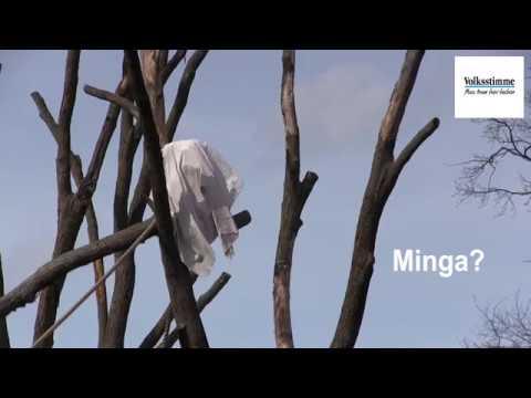 Magdeburg: Schimpansenversteck im Magdeburger Zoo