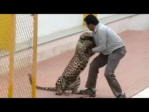 (Video) Leopard Attack in India - WOW Crazy Video *Warning: Some might find this Video Graphic*