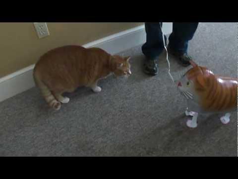 Γάτα εναντίον φουσκωτής γάτας