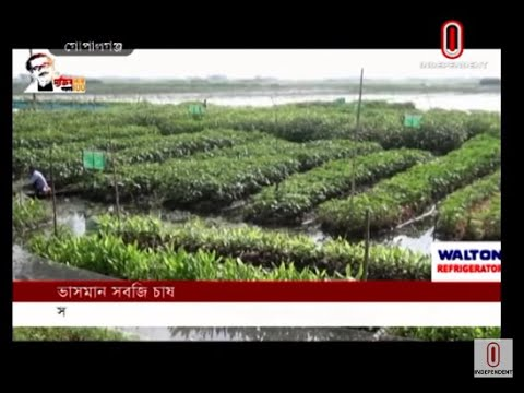 Gopalganj farmers successful in cultivating floating vegetables (17-09-20) Courtesy:IndependentTV