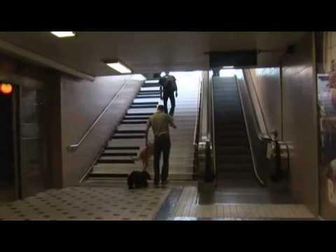 為了環保愛地球,樓梯竟然變身成一巨大鋼琴!