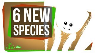 6 of the Coolest New Species Discovered in the Last Year by  SciShow