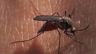 Secretaria de Saúde de Marília intensifica ações de combate à dengue durante o frio