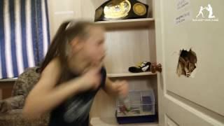 Video A 9 ans elle détruit la porte de sa chambre à coups de poing MP3, 3GP, MP4, WEBM, AVI, FLV Juni 2017
