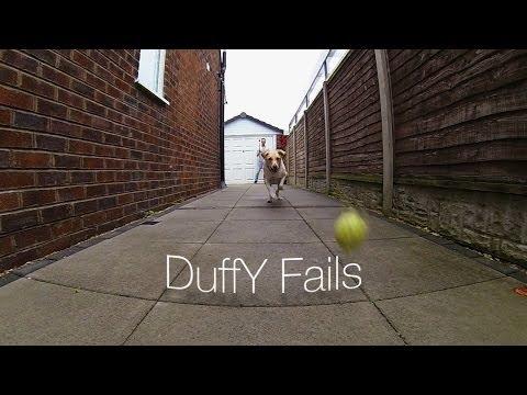 Los 'fails' de Duffy, el perro que no podía atrapar una pelota