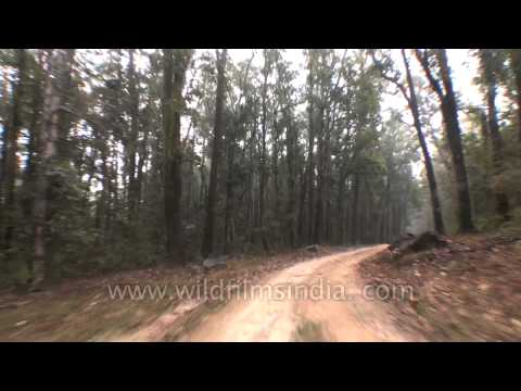 Driving Through Dense Forests Of Kanha National Park