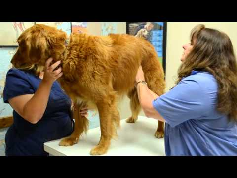 Veterinary - Dr. Julie Wickel of Claws & Paws Veterinary Hospital, in Pearland, Texas discusses the importance of semi-annual physical exams for your pets and then walks ...