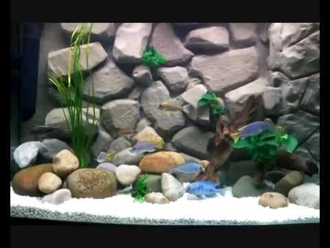 fish tank wallpaper. Fish+tank+backgrounds+3d