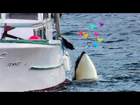 Orca y el perro