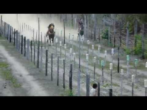 Corrida de cavalo em capitão poço - Pará (zeus e  Ratinho)