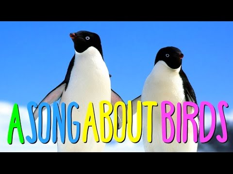 An Australian song by Australians about Australian birds.