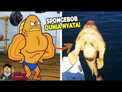 Download Video Aslinya Beneran Kekar?! Inilah Karakter Film SpongeBob di Dunia Nyata