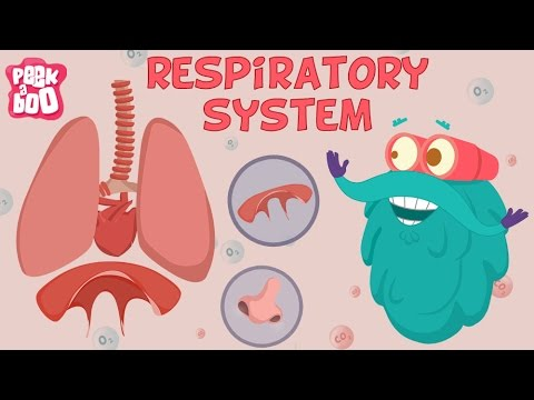 Respiratory System | The Dr. Binocs Show | Learn Videos For Kids