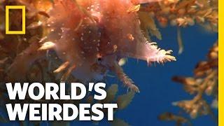 World's Weirdest - Camouflaged Killer