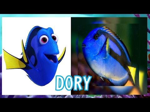 Finding Dory REAL LIFE All Characters  #VirtualRealStars [HD] 2017