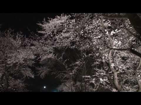 100420 旧白根市庄瀬 庄瀬小学校脇 夜桜
