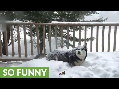 lhusky-nella-neve