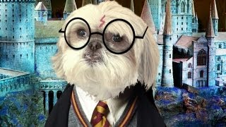 WHO IS HARRY POTTER?