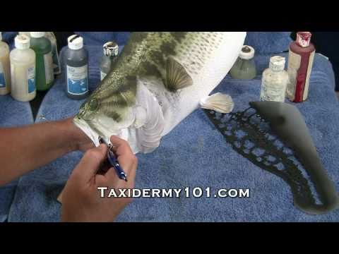 Bass, Fish Taxidermy Training DVD Overview