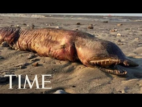 We Finally Know What This Hurricane Harvey Sea Creature Actually Is | TIME