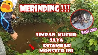 Video MANCING IKAN BAUNG dengan Umpan Kucur, Auto MERINDING AKIBAT STRIKE MONSTER INI #46 MP3, 3GP, MP4, WEBM, AVI, FLV November 2018