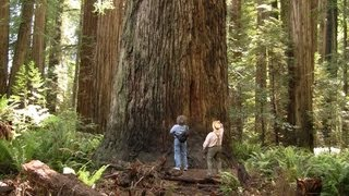 Crescent City (CA) United States  city images : Magnificent Ancient Redwood Forest - near Crescent City, California