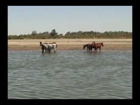 рыбалка в худжанде видео