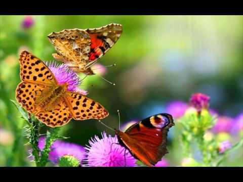 Cantecele - A zburat un fluturaș