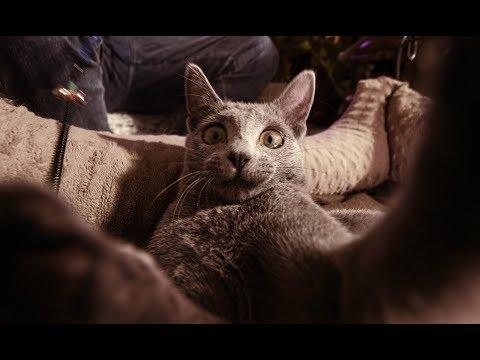 Miły Pan - Ale Kot