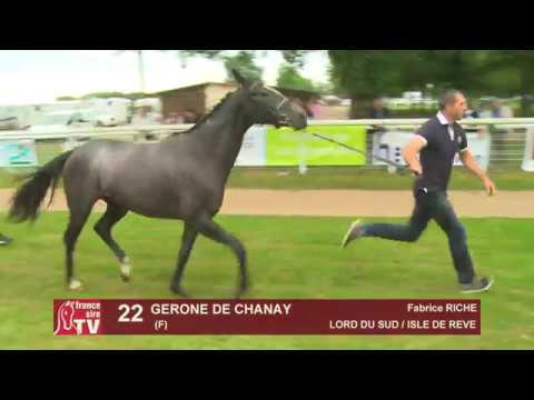 Chaser Day 2018 : Lot 22 - GERONE DE CHANAY