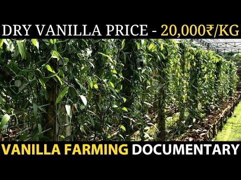 VANILLA FARMING / VANILLA CULTIVATION