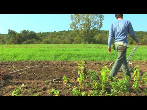 Vegetable & Fruit Gardening : How to Grow Carrots