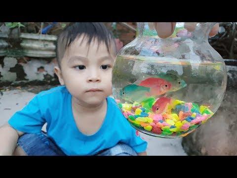 Trò Chơi Bé Pin Cá Koi Con ❤ ChiChi ToysReview TV ❤ Đồ Chơi