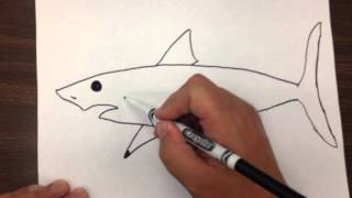 How to Draw a Great White Shark Step by Step