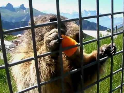 Il Paradiso delle Marmotte