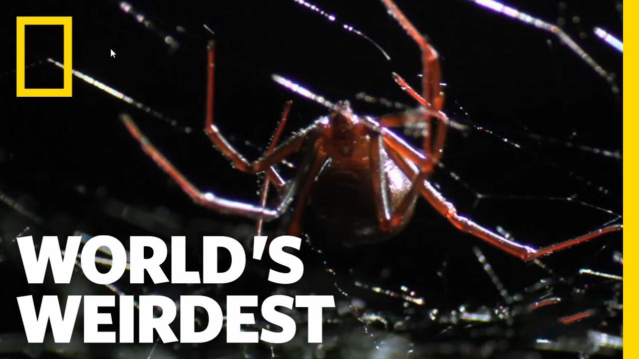 World's Weirdest – Deadly Mating