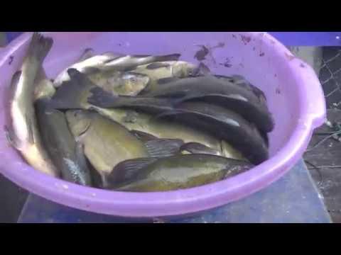 Видео отчет о рыбалке за 22 июня 2019