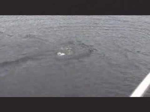 Nessie - some peope on a boat saw something!