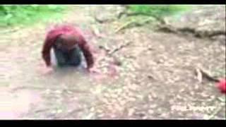 Video Hajgare