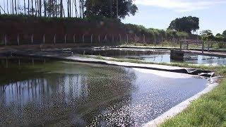 Lagoas de chorume do antigo aterro sanitário de Bauru estão prestes a transbordar