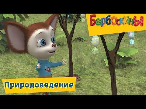 Барбоскины - Природоведение. Сборник мультиков (видео)