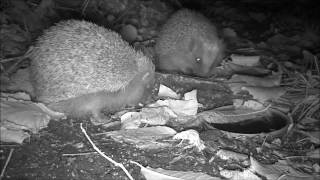 Wildlife Trail Camera - 9.11.2016