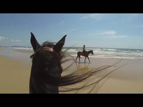Beach Horse Riding with Noosa Horses