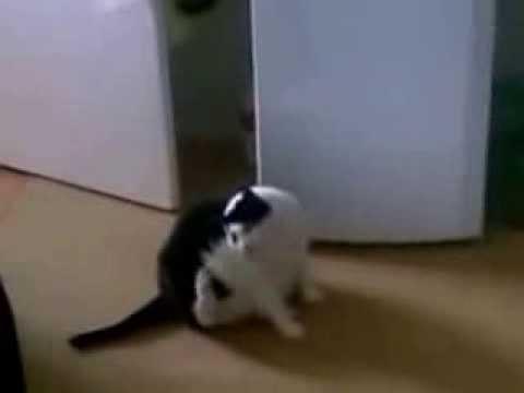 Песня жирный кот скачать