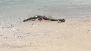 我々のイメージするネッシーじゃないか!ネス湖の怪物「ネッシー」っぽい形状をした謎の死骸が海岸に打ち上げられる(アメリカ)
