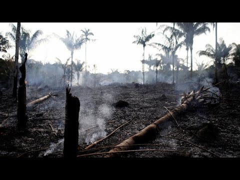 Βραζιλία: Φλέγεται ο Αμαζόνιος- Ρεκόρ πυρκαγιών φέτος