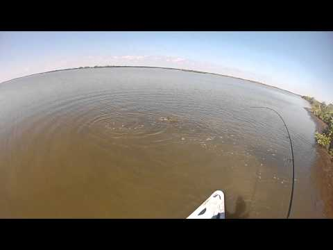 Redfish Feet Away! - kayak fishing, kayak photos, kayak videos
